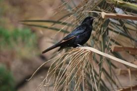 Birds at Ein Gedi