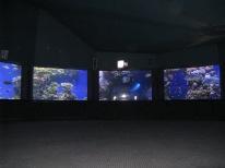Giant Aquarium...