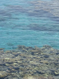Coral reefs of Eilat...