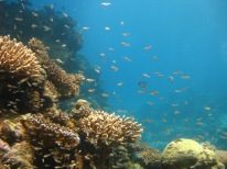 Coral reefs seen from the under water observatory