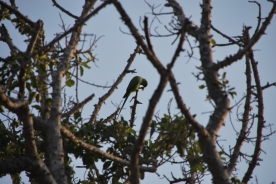 The national park protects several birds - seen here is the common parrot
