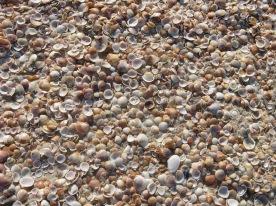 Shells again...